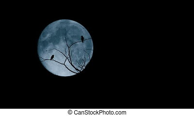 Couple Of Birds Fly Off In Front Of Full Moon