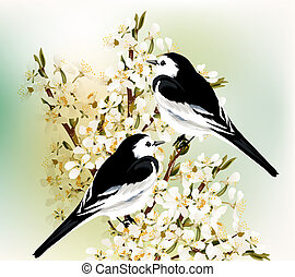 Couple of black and white birds sit on a spring blooming ...