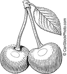 Couple of cherries with leaf. Fruit in engraving style