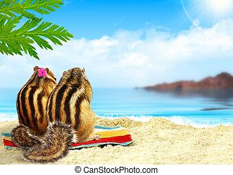 chipmunks on the beach, honeymoon concept
