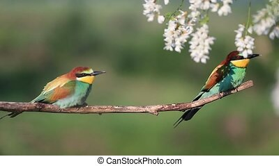 couple of colorful birds resting on the branch after the...