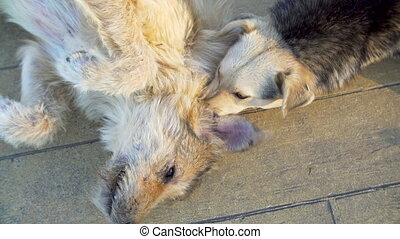 Couple of cur homeless dogs lying on the ground playing