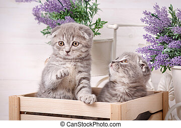 Couple of cute cats in a wooden box. Lavender flowers in the background