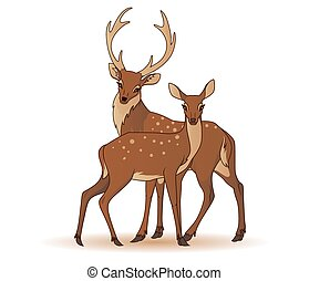 Couple of deers isolated