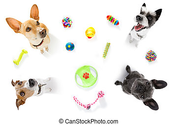couple of dogs with pet toys - curious couple of dogs ...