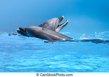 Couple Of Dolphins In The Blue Water