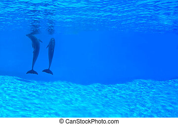 Couple Of Dolphins Underwater