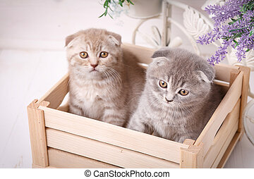 Couple of funny kittens sitting in the wooden box and and looking up