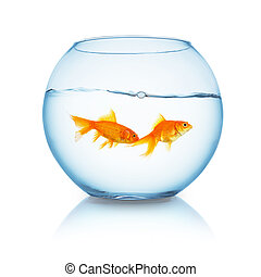 couple of goldfishes in a fishbowl
