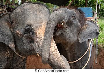 Couple of hugging elephants