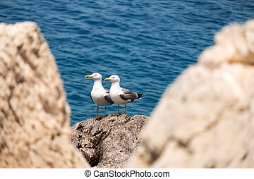 Couple of seagull on stones against the sea