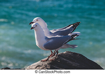 couple of seagulls on a rock at the beach next to the Indian Ocean