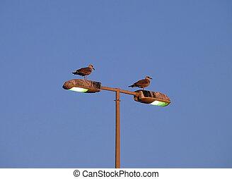couple of seagulls