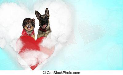 couple of spitz and german shepherd dogs panting happy