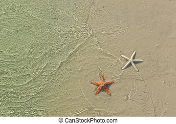 Couple of starfish on a tropical beach, tide coming in