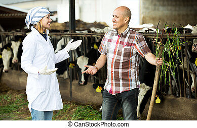 Couple of vets working with milky cows - Two workers of vets...