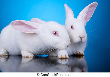 white little bunnies