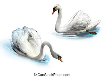 Couple of white swans, isolated realistic illustration on...