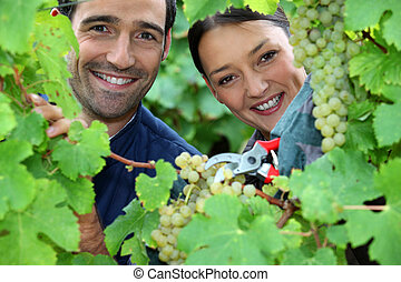 couple of wine-growers all smiles amid vineyards