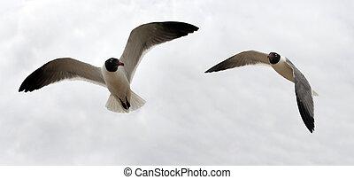 couple, oiseau