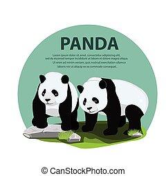 couple, panda