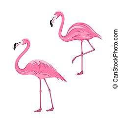 Couple Pink Flamingos Isolated on White Background