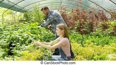 Couple planting green in hothouse
