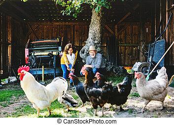 couple, poules, personne agee, farm.