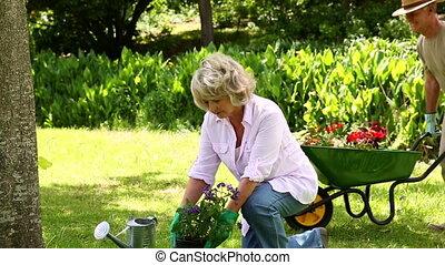 couple retiré, jardinage, ensemble