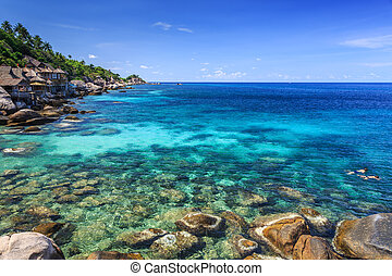 Couple snorkelling in crystal clear sea, Koh Tao, Samui,...