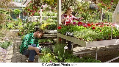 Couple taking care of flowers in garden - Relaxed woman...