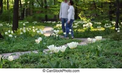 Couple walks in the park amoung tulips