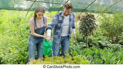 Couple watering plants together