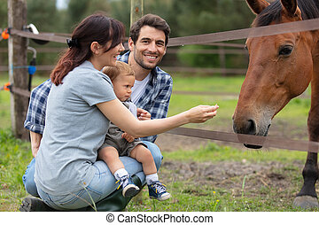 couple with young child feeding horse in a field