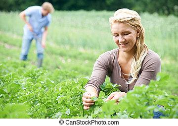 Couple Working In Field On Organic Farm
