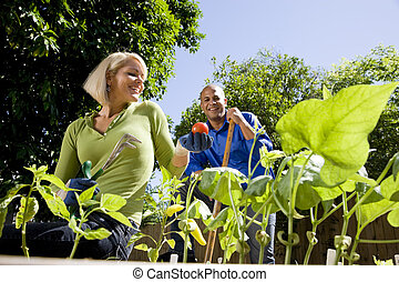 Couple working on vegetable garden in backyard - Mid-adult...
