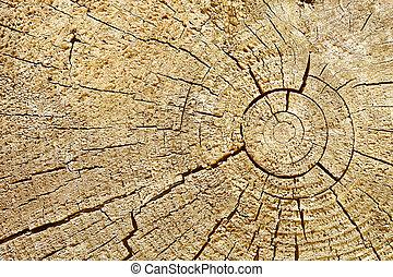 coupure, bûche, -, bois, fond, photographique