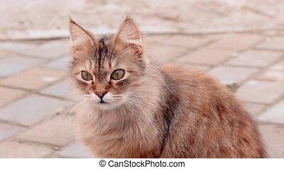 cour, ensoleillé, yeux, chat, mignon, regarde, autour de, pelucheux, séance, maison, day., vert