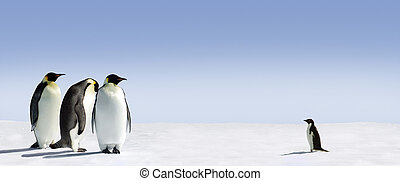 Courage - Three emperor penguins are met by an adelie...