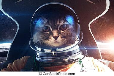 courageux, meublé, ceci, image, nasa., chat, éléments, astronaute, cabin., vaisseau spatial