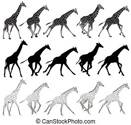 courant, marche, girafes, ensemble
