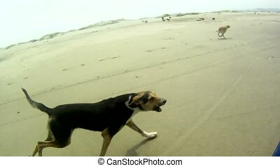 courant, plage, chiens