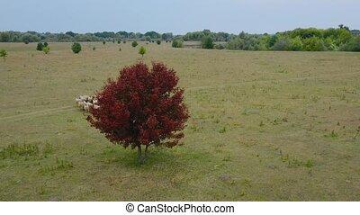courant, sheeps, bourdon, frame., troupeau, feuillage, sheep., suivre, centre, vue, rouges, pasture., aérien, arbre