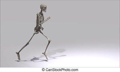 courant, squelette