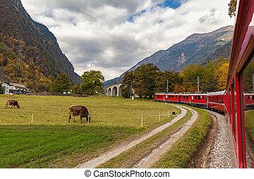 courant, suisse, train, rouges, vers, vue, brusio, viaduc, ...