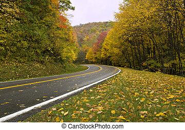 courbé, automne, route