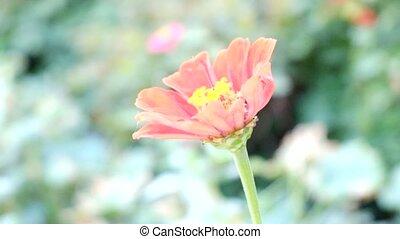 courber, fleur, rouges, vent