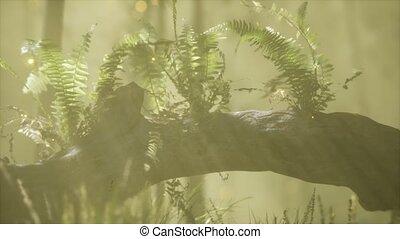 courber, lumière soleil, horizontalement, coffre, arbre,...