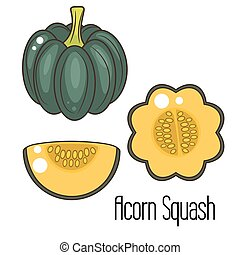 Clip art et illustrations de courge gland 71 graphiques dessins et illustrations libres de - Courge dessin ...
