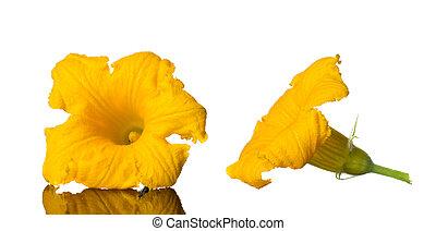 courgette, photo, isolé, jaune, arrière-plan., studio, fleurs blanches, citrouille